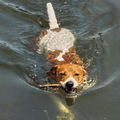 Teaser zu Baden mit Hund in Sachsen