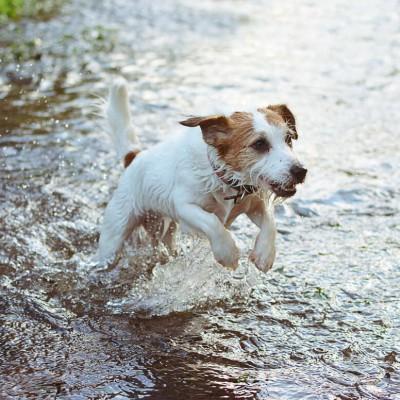 Teaser zu Baden mit Hund in Thüringen