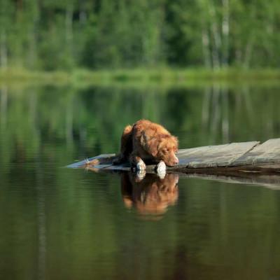Teaser zu Badeurlaub mit Hund in Hessen