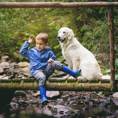 Teaser zu Mit Hund in Thüringen - Das sollten Sie wissen!